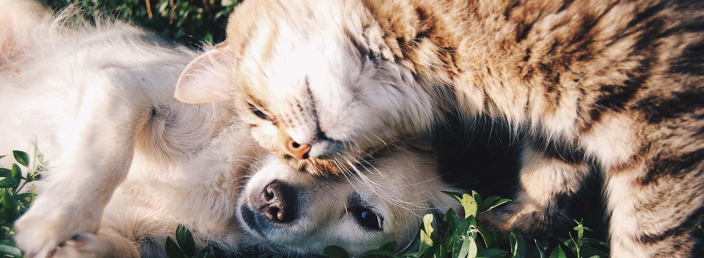 PetProtect oder WET.Protect: Hund und Katze